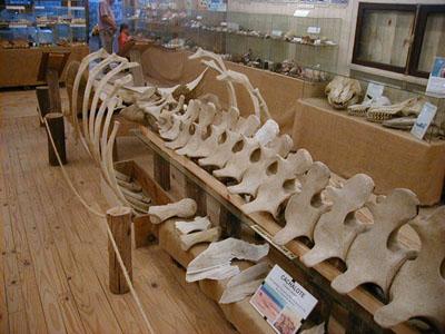 Museo del Mar - La Barra