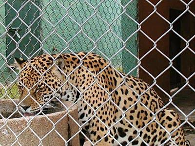 Zoológico del Parque Medina - San Carlos