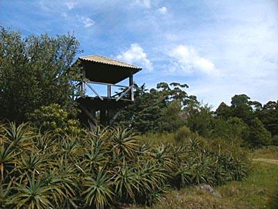 Arboreto Lussich - Punta Ballena