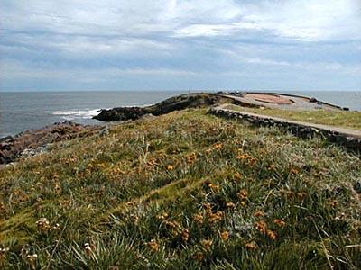 Ruta Panorámica - Punta Ballena