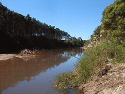 Arroyo del Potrero