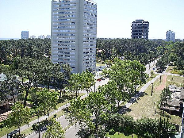 Avenida Roosevelt, preciosa avenida con senderos para caminar o hacer bicicleta, muy arbolada.