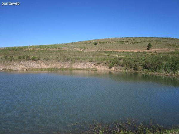 Vista de la aguada en su borde inferior junto al acceso al viñedo hacia el este.