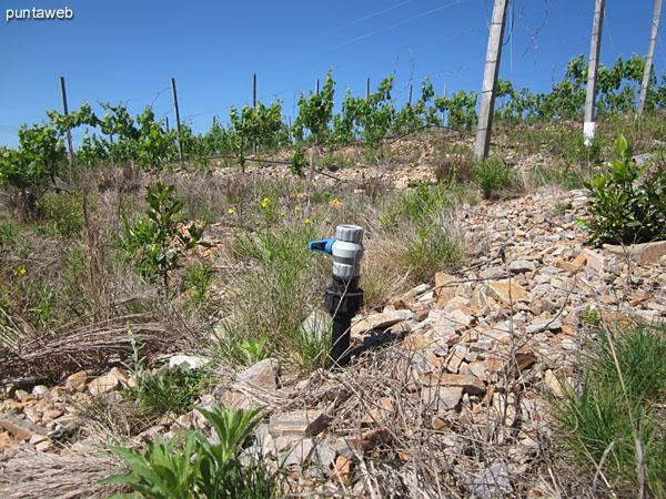 Aguada. Ubicada junto al lindero y acceso al viñedo.<br><br>Vista hacia el oeste.
