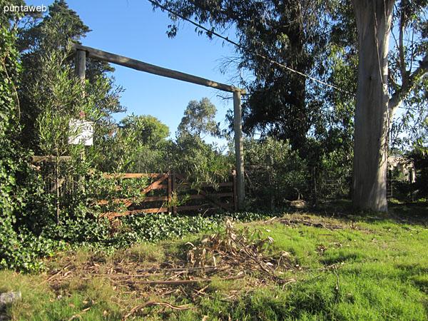 Vegetaci�n del terreno en su parte media.